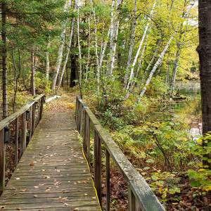 Moose Haven 3